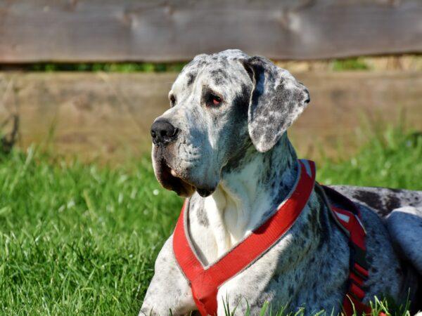 Sårrens til hunde samt Virbac hundemad med levering til hele DK